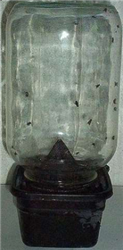 Get rid of flies with a DIY fly trap