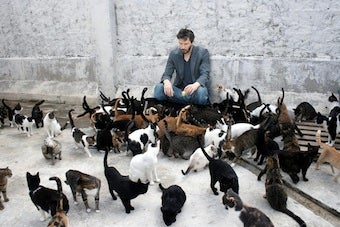 Sweet Jesus, That's A Lot Of Cats.