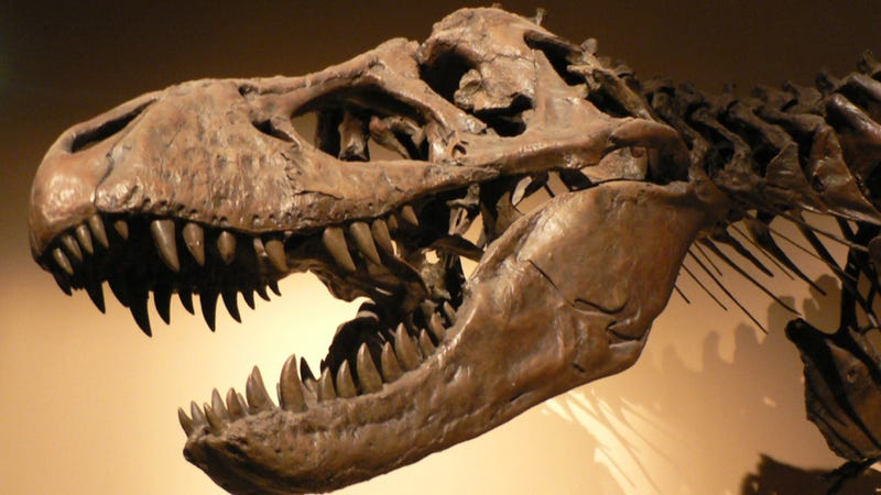 T. Rex's bite was the most powerful the world has ever known