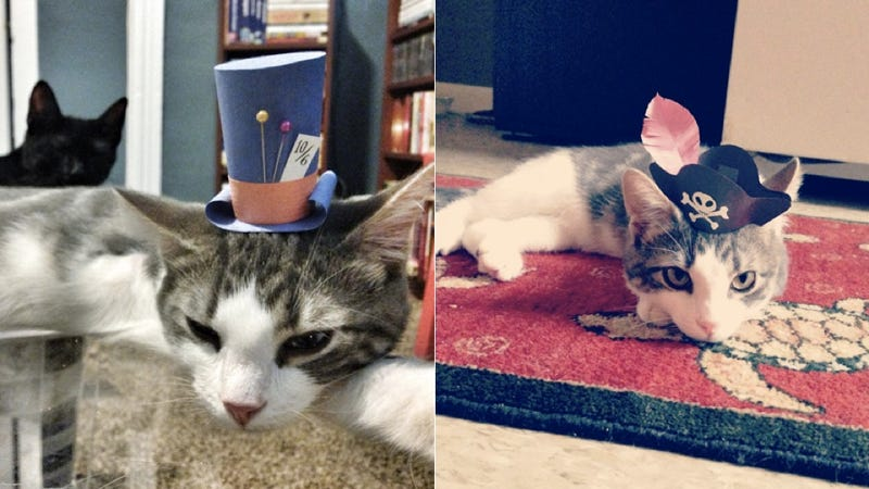 Three-legged cat wearing tiny hats will fill you with happiness
