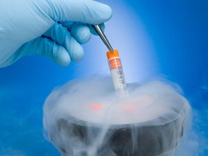 "New ""vitrification"" technique allows women to freeze their eggs for future use"