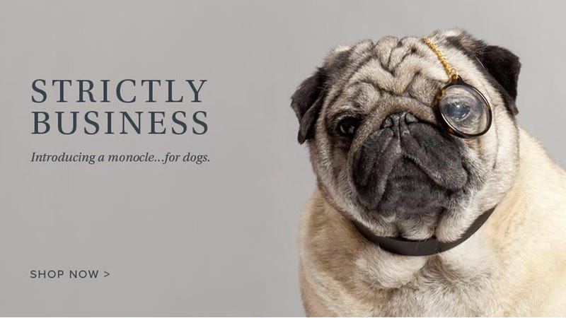 Warby Parker Makes Adorable Glasses for Dogs, Wins for Cutest April Fool's Prank