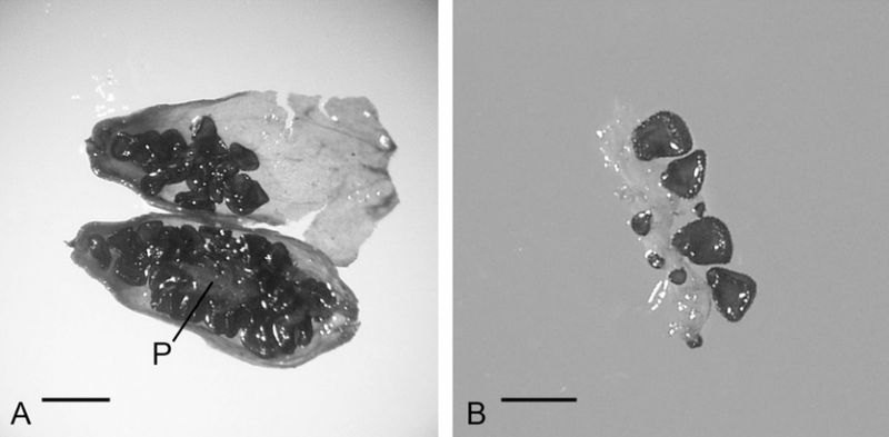 This ancient Arctic plant regenerated after being frozen for 32,000 years