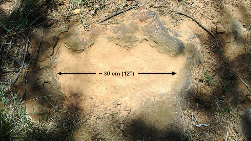 NASA discovers 100 million year old dinosaur footprints in its backyard