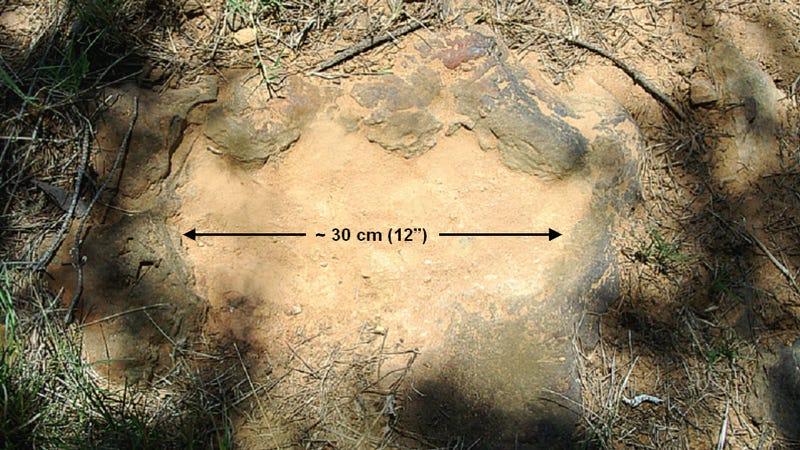 NASA discovers 100 million year old dinosaur footprints in its backyard