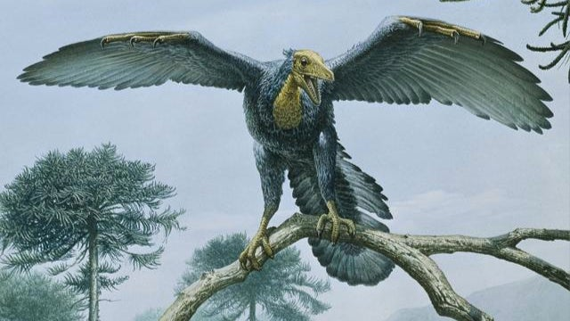 New evidence suggests Archaeopteryx dressed in black