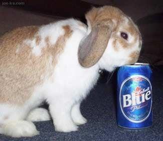 Broad Street Bullies, Bunnies And Booze