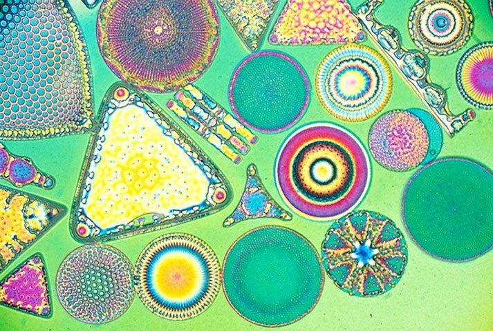 This psychedelic structure is what dopamine looks like under a microscope