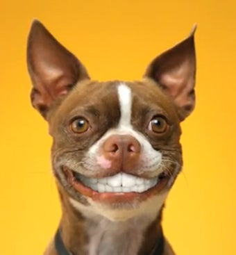 Your Dog Might Actually Be Able to Smile