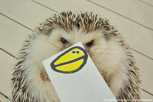 Hedgehog Impersonates Pikachu (and More)