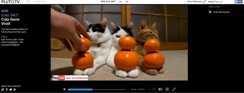 Rejoice! Society Finally Has the 24-Hour All Cat Channel It Deserves