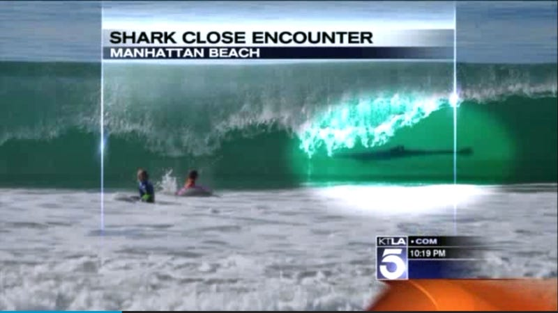 Mom Accidentally Snaps Photo of Son's Close Encounter with a Shark