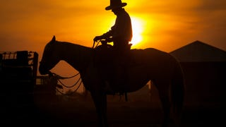 Man Fined For Riding Horse to Taco Bell, Achieves Peak Texas