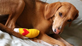 ​How To Make A First Aid Kit For Your Dog