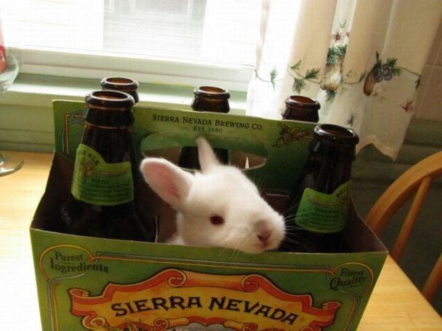 The hoppiest beer