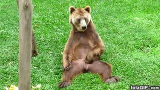 Bear Report: February 23, 2015