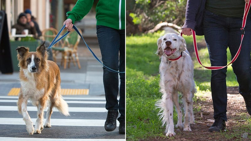 Behold the Cleverest Dog Leash We've Ever Seen