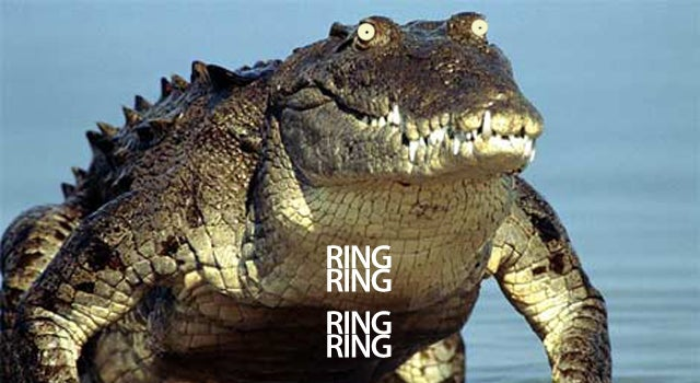 Crocodile's Tummy Rings After Eating Cellphone