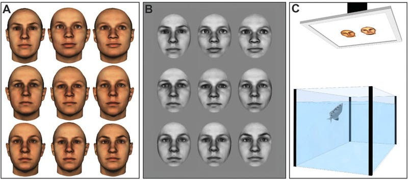 Fish Can Recognize Faces, So Stop Flushing Them Down the Toilet