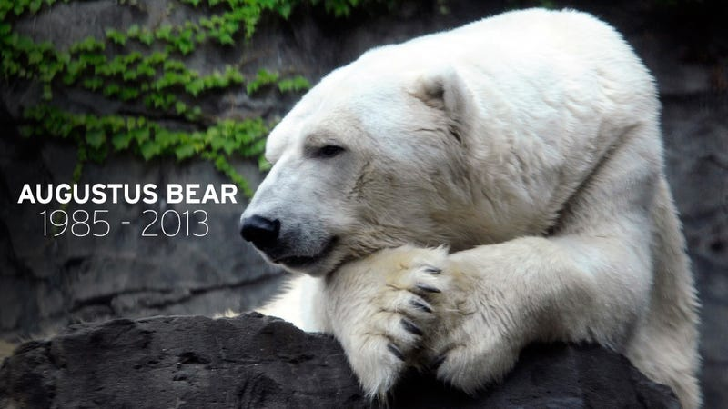 Gus, the Depressed Central Park Polar Bear, Passes Away at 27