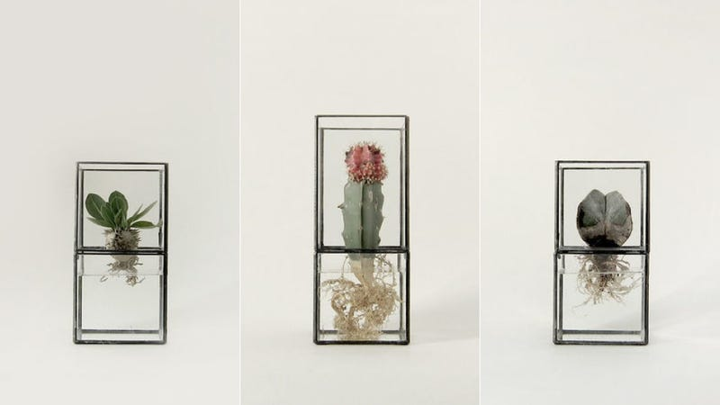 These Simple Japanese Terrariums Are Your Desk's New Best Friends