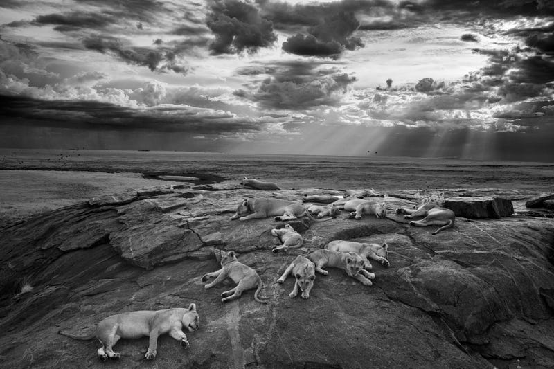 41 More Amazing Photos From the Sony World Photography Awards