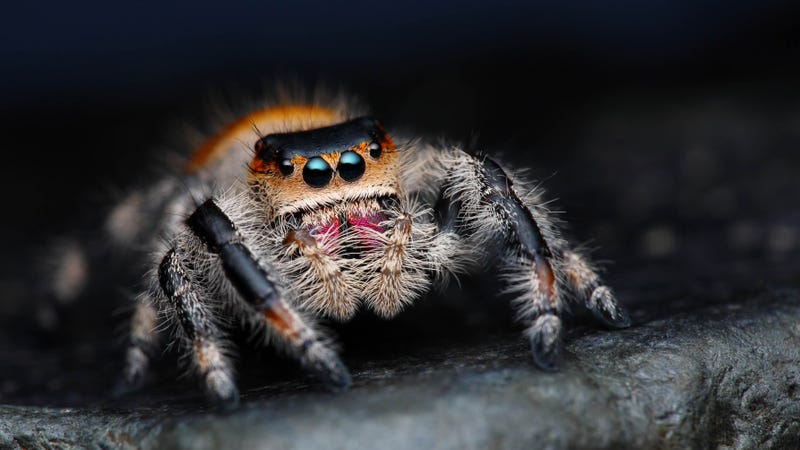 In Spider Society, Female Spiders Are Either Warriors or Nannies
