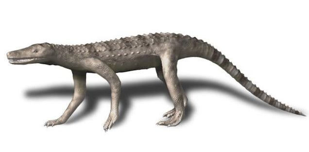 """Carolina Butcher"" Was a Massive Croc That Hunted on its Hind Legs"