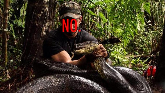 Seriously, Fuck Discovery And Its 'Eaten Alive' By An Anaconda Show