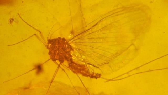 Mayflies might just have the saddest, most perfectly evolved existence of any species