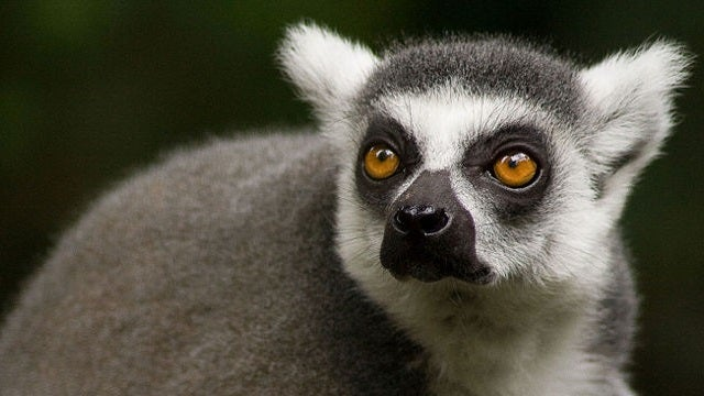 Everything You Need To Know About Lemuria, The Lost Continent Of Lemurs