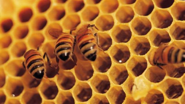 How honey could help kill drug-resistant bacteria