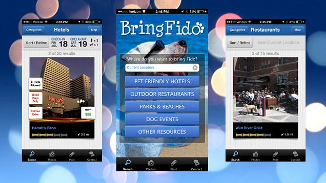 BringFido App Finds Pet-Friendly Hotels, Dog Parks, and Restaurants