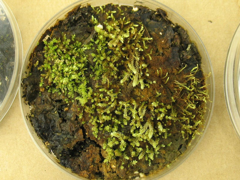 Scientists Revive 400 Year-Old Frozen Plants