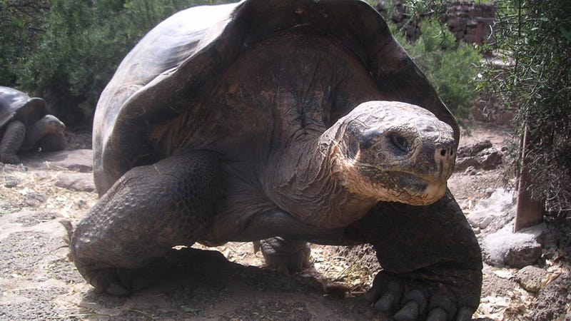 Museum Helps Preserve Iconic Tortoise Lonesome George