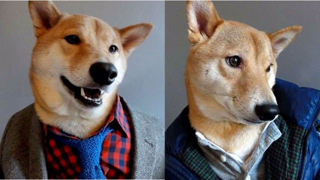 Dog Wearing People Clothes Takes Tumblr By Storm