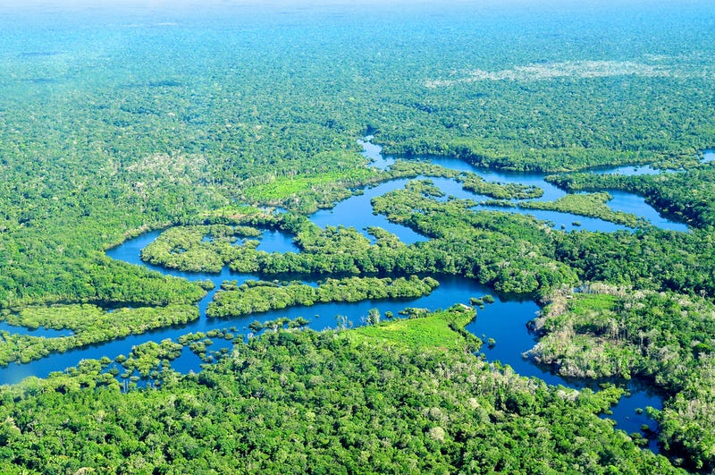 1,000-year-old farming secrets could save the Amazon rainforest