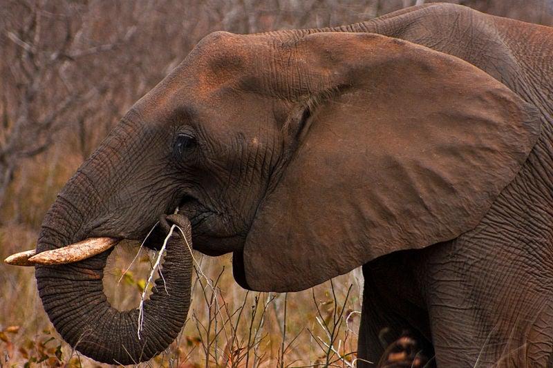 Do Wild Animals Get Drunk and High On Purpose?