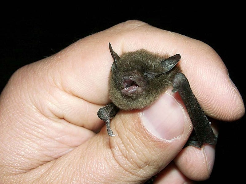 How synthetic biology could save bats (and the world)