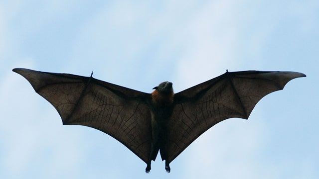 Little Girl Bitten by Rabid Bat After Self-Appointed Bat Expert Gave Go-Ahead To Hug It
