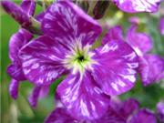 Use vinegar in your garden