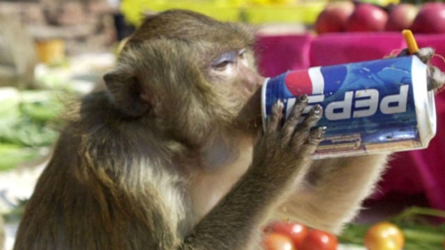 CDC To Increase Tests on Monkey Meat