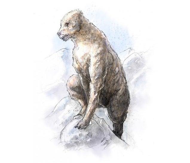"Bigfoot Field Research Organization Head Calls DNA Study ""Meaningless"""