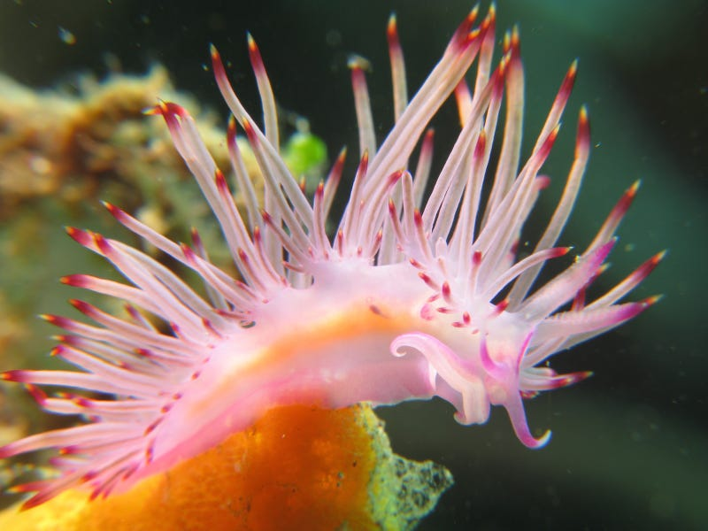 Striking Photographs Of Sea Slugs Expose The Alien World Under the Sea