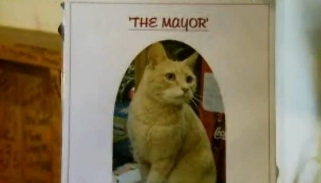 Alaskan Town Has Had Same Feline Mayor for Fifteen Years