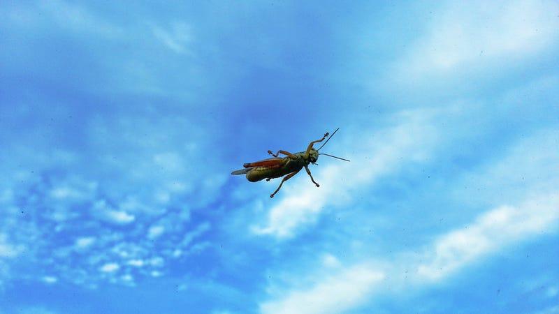 Shooting Challenge: Bugs 4