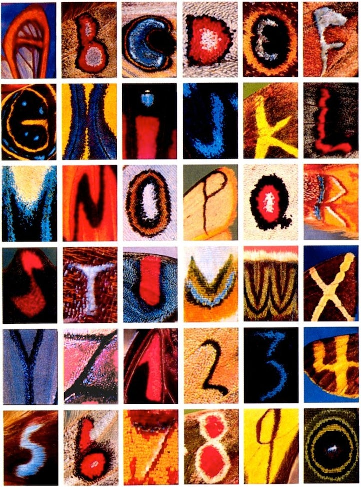 The entire alphabet, photographed on butterfly wings