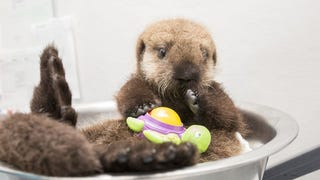 Hang Out Virtually With Pup 681's Caregivers