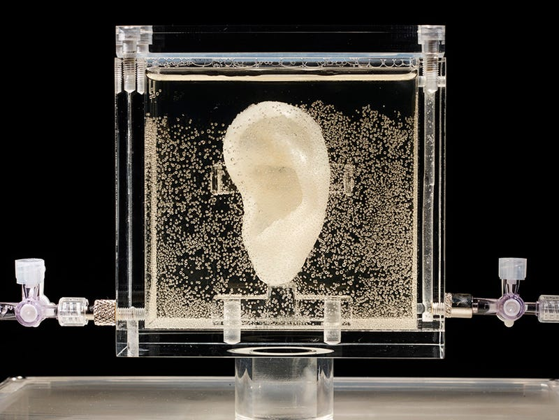 Artist regrows Van Gogh's ear using his DNA