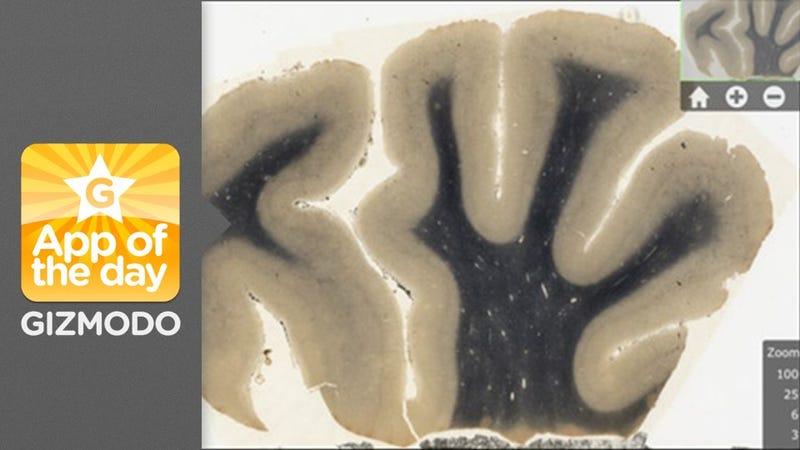 NMHMC Harvey: Check Out Einstein's Crazy Brain